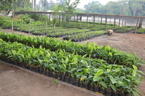 Salobo repassa sementes de espécies florestais ao ICMBio