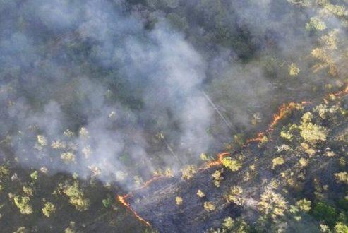 Bombeiros combatem incêndio florestal no parque das Andorinhas