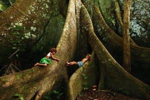samauma_a_rainha_das_florestas