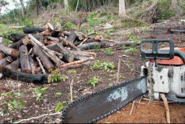 Desmatamento na Amazônia cresce 29% em 1 ano